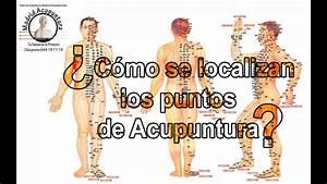 Sistemas De Localizaci U00f3n De Los Puntos De Acupuntura