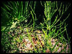 Welche Pflanze Produziert Am Meisten Sauerstoff : silizium das beauty spurenelement eldy cocou mit liebe licht und pflanzenkraft ~ Frokenaadalensverden.com Haus und Dekorationen