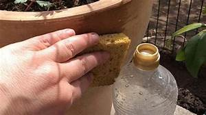 Pot En Terre Cuite Pas Cher : le truc tout simple pour nettoyer un pot de fleurs tach ~ Dailycaller-alerts.com Idées de Décoration