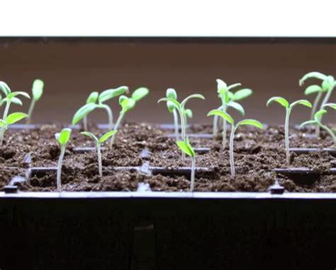 diy growing plants effortless step  step   grow