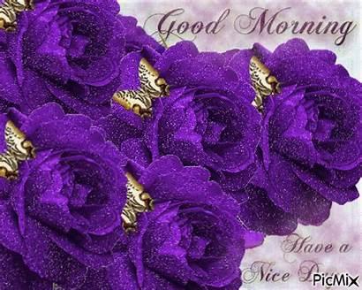 Morning Purple Rose Roses Glittery Nice Flowers