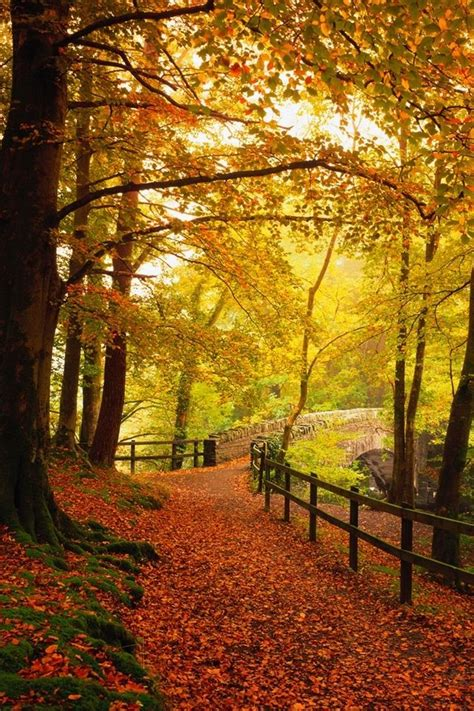 Gold Autumn Wallpapers by Gold Iphone Wallpapers Hd Images Fall Wallpaper