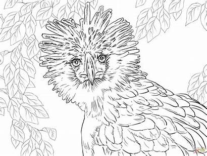 Eagle Coloring Philippine Pages Philippines Drawing Realistic