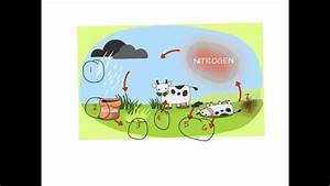 Nitrogen Cycle Explained