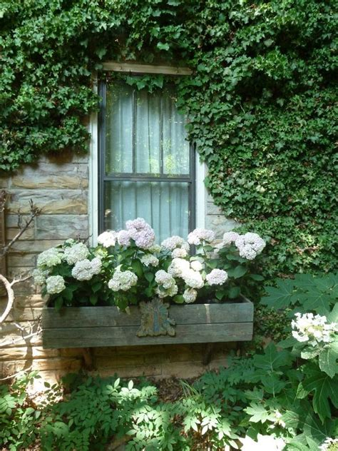 images  window boxes  pinterest sheds