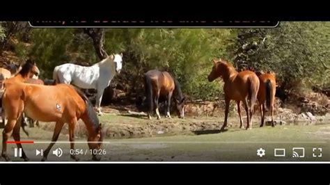 horse behavior wild dominance natural understanding herd