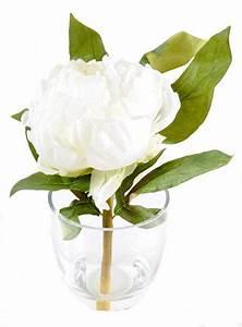 Langage Des Fleurs Pivoine : langage des pivoines blanches sur langage ~ Melissatoandfro.com Idées de Décoration