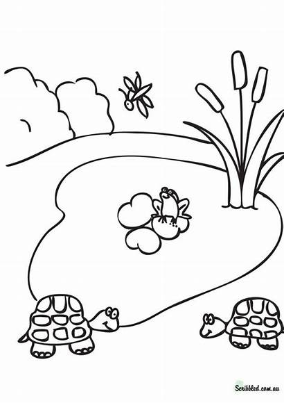 Coloring Pond Lake Pages Drawing Habitat Forest