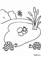 Coloring Pond Pages Drawing Habitat Printable Forest Template Clip Clipart Drawings Sketch Paintingvalley Popular sketch template
