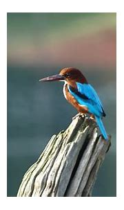Download 1920x1080 wallpaper bird, colorful, blur ...