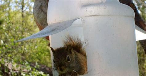 Zombie Head Squirrel Feeder