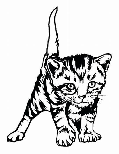 Coloring Kitten Cat Pages Tabby Printable Cats