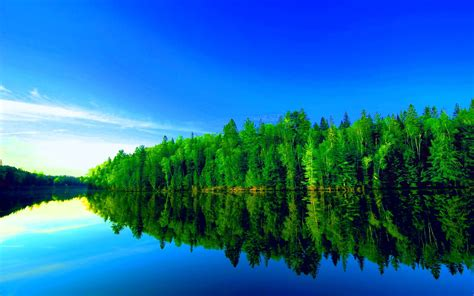 Green Forest Picture by Green Forest Wallpapers Wallpaper Cave