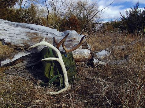 western public land shed hunting and the laws bone collector