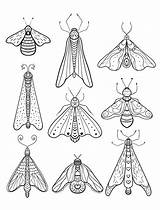 Coloring Pages Moth Insect Adult Printable Print Animal Bug Insects Sheets Wiring Beetle Diagram Colouring Birthday Boat Books Adults Parts sketch template