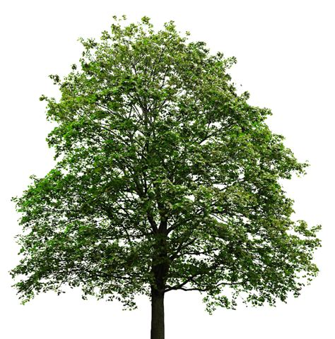 Download High Quality tree transparent background ...