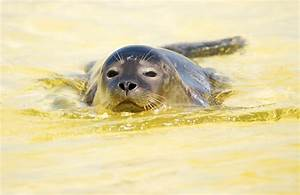GoPro Video: Baby Seal Pup Goes Surfing In England | Time