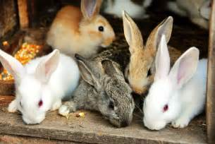 Image result for rabbit, rabbit, rabbit