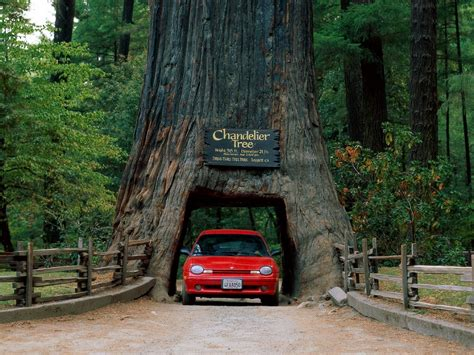 nature grass trees car record road california usa