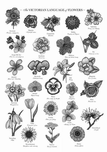 Flowers Language Victorian Flower Birth Tattoo Floriography
