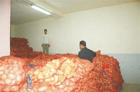 pomme de terre dans les dédales de la spéculation toute