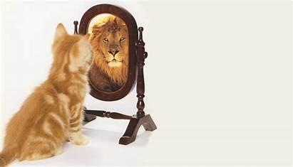 Mirror Say Wow Looking Cat