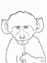 Coloring Baboon Supercoloring Template Designlooter sketch template