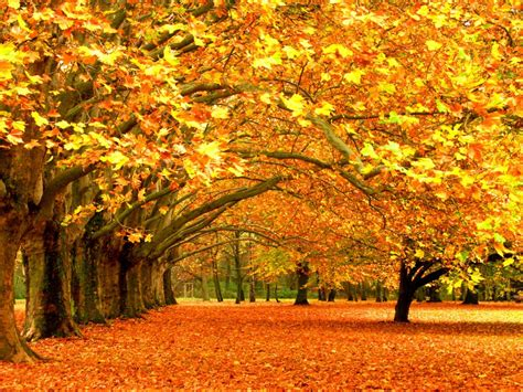 autumn nature wallpapers hd pictures  hd wallpaper