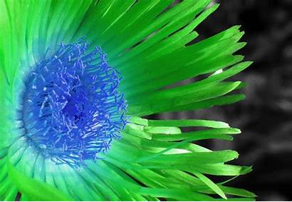 Flower Trippy Colorful Flowers Gifs Changing Lovethispic