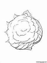 Cauliflower Coloring Pages Drawing Fruits Vegetables Printable Getdrawings Others Site sketch template