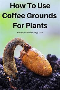 are coffee grounds for plants