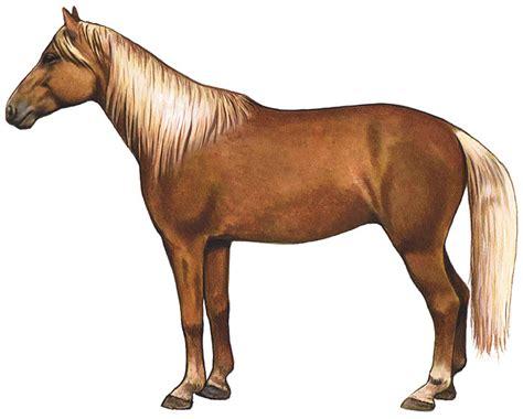 horse kentucky mountain horses american domestic animals poster breeds saddle north feenixx web