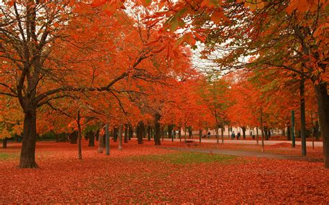 Beautiful Autumn Trees Wallpapers by Beautiful Autumn Trees Wallpapers 2560x1600 2452523
