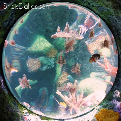 sea grapevine octopus garden opening 719   sea life circle aquarium