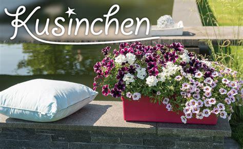 Garten Norden Pflanzen by Pflanze Des Jahres Im Norden Blumen Jentsch Floristik