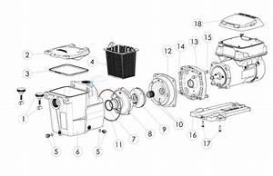 Wiring Diagram  29 Hayward Super Pump Parts Diagram