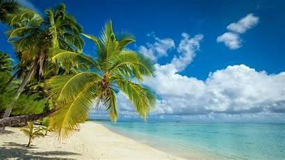 Tropical Palm Beach Island Trees Summer Sand
