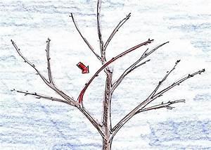 Kirschbaum Richtig Schneiden : apfelbaum schneiden einfache tipps f r anf nger ~ Lizthompson.info Haus und Dekorationen