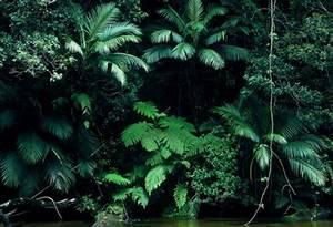 green tropical plants   Tumblr