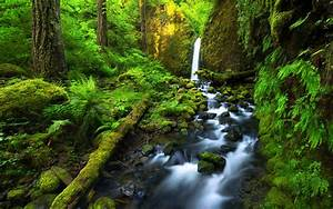 Beautiful, Costa, Rica, Falls, River, Jungle, Lush, Green, Vegetation, Fern, Green, Moss, Rocks, Trees, Stones