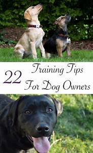 dog training tips 22 great ideas to help you train your lab With best dog training sites