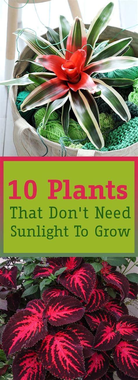 desk plants that don t need sunlight 10 plants that don 39 t need sunlight to grow växter