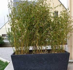 Bambou En Pot Pour Terrasse : pot bambou exterieur pivoine etc ~ Louise-bijoux.com Idées de Décoration