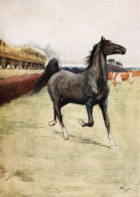 Black Beauty | Plot, Characters, & Facts | Britannica