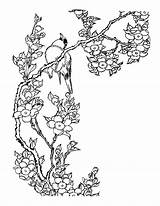 Cherry Blossom Coloring Tree Pages Getcolorings Printable Getdrawings sketch template