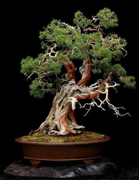 Bonsai Baum Pflanzen bonsai baum diese ausgefallene pflanze n 228 kennenlernen