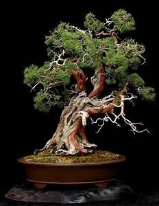 Bonsai Baum Garten : bonsai baum diese ausgefallene pflanze n her kennenlernen ~ Lizthompson.info Haus und Dekorationen