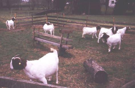 Vereinigung Der Ziegenhalter Und Ziegenzüchter Für