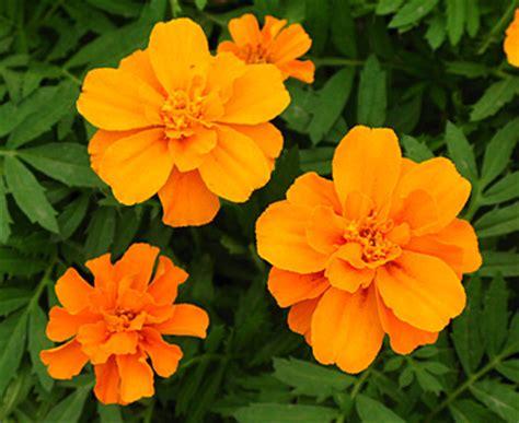 fernlea flowers  flower blooms