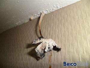 champignon de maison dangereux champignons lignivores e p With champignon de maison dangereux